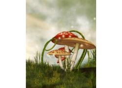 草地里的蘑菇