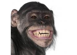 呲牙的猴子