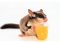 拿着果冻的老鼠