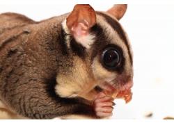 吃食物的松鼠