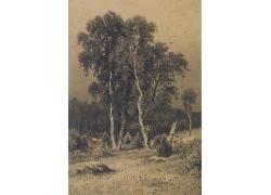 树林里的女孩图片