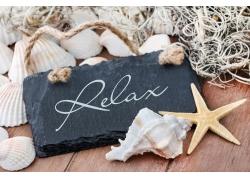 木板上的海螺和贝壳
