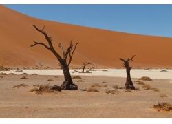 沙漠中的树