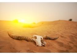 沙漠与骨骸