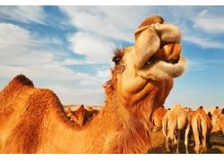 沙漠中的动物
