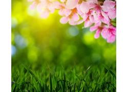 青草桃花和光斑