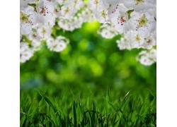 桃花和草地
