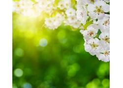 阳光和桃花