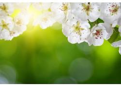 桃花和光斑