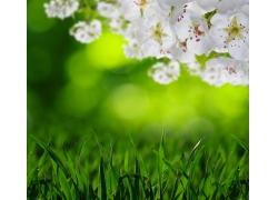 青草桃花和梦幻背景