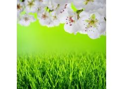 草地上面的桃花