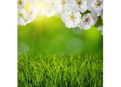 阳光下的草地和桃花