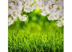 桃花下面的草地