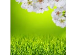 草地和盛开的桃花