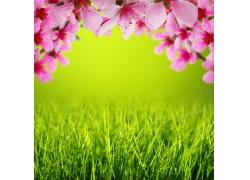 桃花和青草