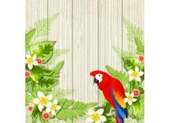 鹦鹉花朵背景