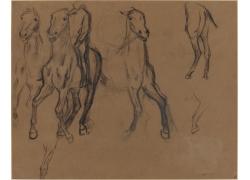 马匹和马匹局部