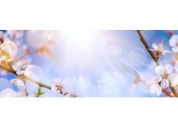 阳光下的桃花