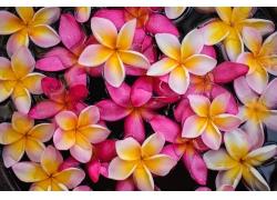 粉色和黄色的花朵