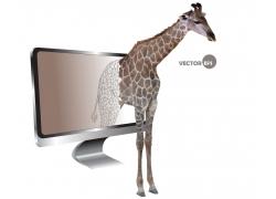 电视里的长颈鹿图片