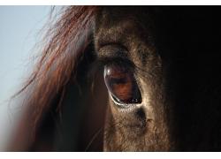 棕色的马眼睛