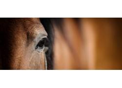 棕色的马匹眼神