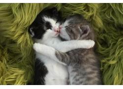 拥抱的小猫图片