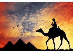 金字塔与骆驼