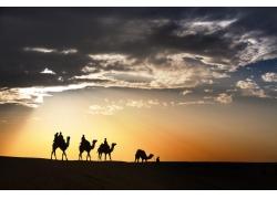 人物与骆驼