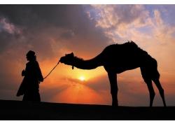 骆驼与人物