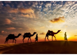 沙漠里的人物与骆驼