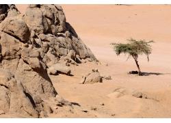 沙漠里的高山与树