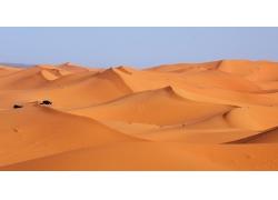 沙漠里的动物