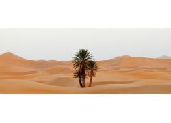沙漠里的植物