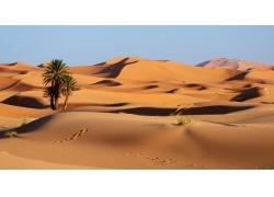 沙漠里的树与蓝天