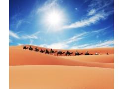 沙漠里的骆驼