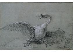 张着翅膀的鹅子素描