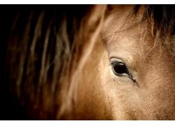 漂亮的棕色马眼