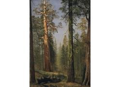 春天的树林油画