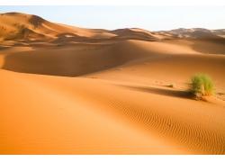 沙漠上的植物
