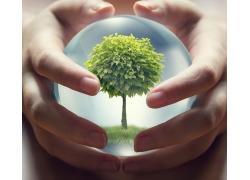 双手中间水晶球里的树木
