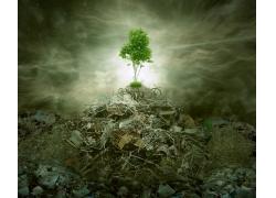 垃圾堆上的树木和阳光