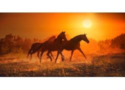 阳光下奔跑的马