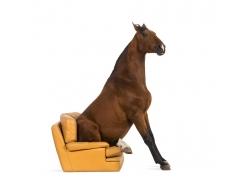 沙发上的马侧身摄影