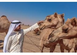 摸骆驼鼻子的男人