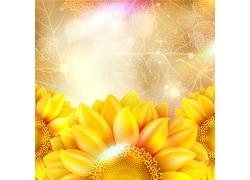 叶脉背景下的向日葵花