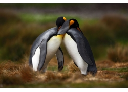 企鹅的拥抱图片