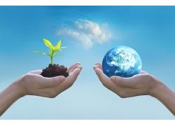 手掌中的地球和嫩苗