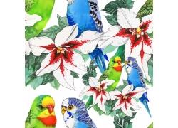 鲜花鹦鹉水彩背景