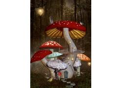 树林中的蘑菇